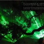 Lasers Oak Tree