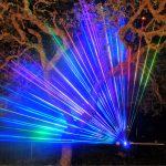 Laser Oak Tree